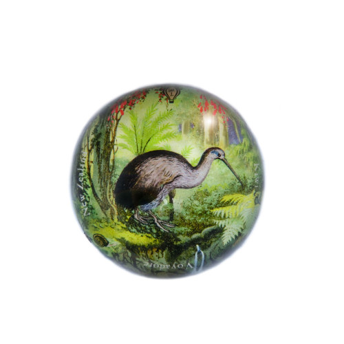 Paperweight: Kiwi In New Zealand Forest (Handmade). Made in New Zealand gift.