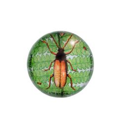 Paperweight: Huhu Beetle (Handmade)