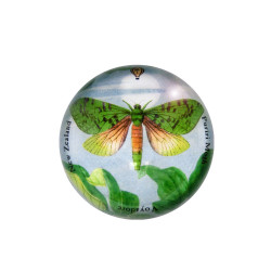 Paperweight: Puriri Or Ghost Moth (Handmade)