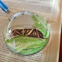 Paperweight: Tree Weta (Handmade)