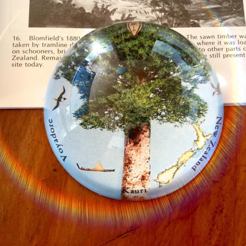 Paperweight: Kauri Tree (Handmade). Made in New Zealand gift.