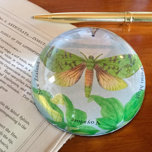 Paperweight: Puriri Or Ghost Moth (Handmade). Made in New Zealand gift.