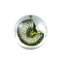 Paperweight: Paper Nautilus (Handmade)