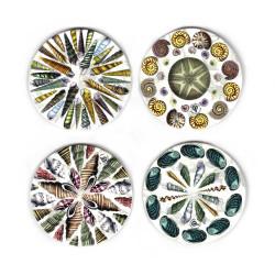 Coasters: Seashells of New Zealand. Set of 4 (Ceramic)