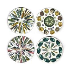 Coasters:Seashells of New Zealand. Set of 4 (Hardboard)