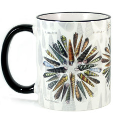Mug: Turret and Auger Seashells of New Zealand (Colored Rim & Handle)