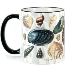 Mug: Seashells of New Zealand (Colored Rim & Handle)