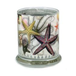 Pen Pot: Starfish Found in The Pacific Ocean, 1793 (Handmade)