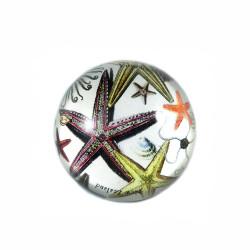 Paperweight: Starfish (Handmade)